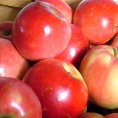 Apple 'Rubee Red' M116