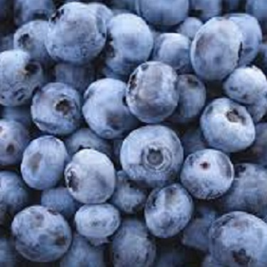 Blueberry 'Blue Joy'