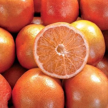 Citrus grapefruit 'Cutler's Red'