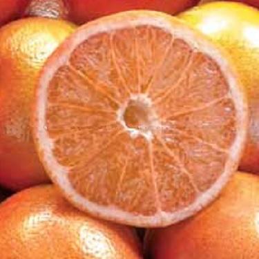 Citrus grapefruit 'Cutlers Red' Dwarf