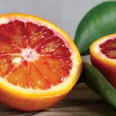 Citrus orange 'Blood'
