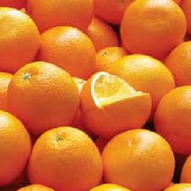 Citrus orange 'Seville'