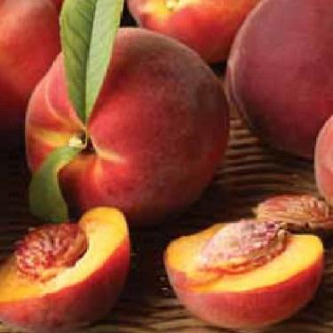 Peach 'Honey Babe' 60cm Std